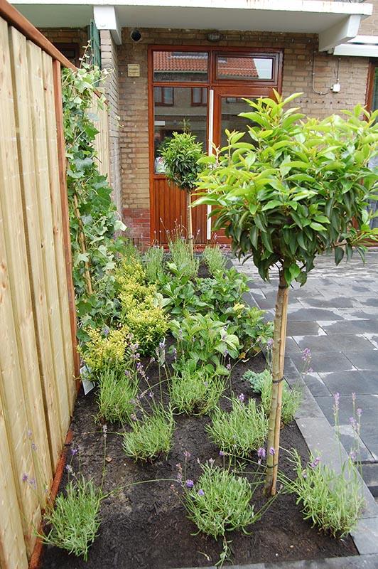 Complete tuin in Santpoort - 21 van 27