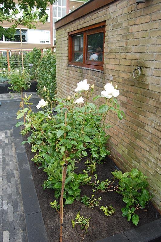 Complete tuin in Santpoort - 22 van 27