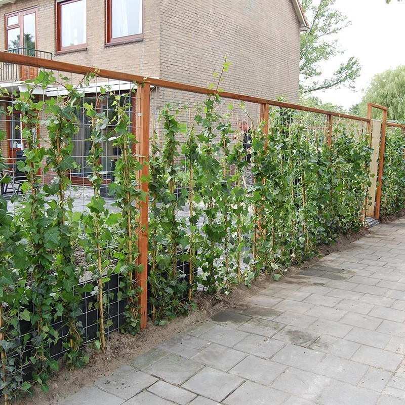 Complete tuin in Santpoort - 26 van 27