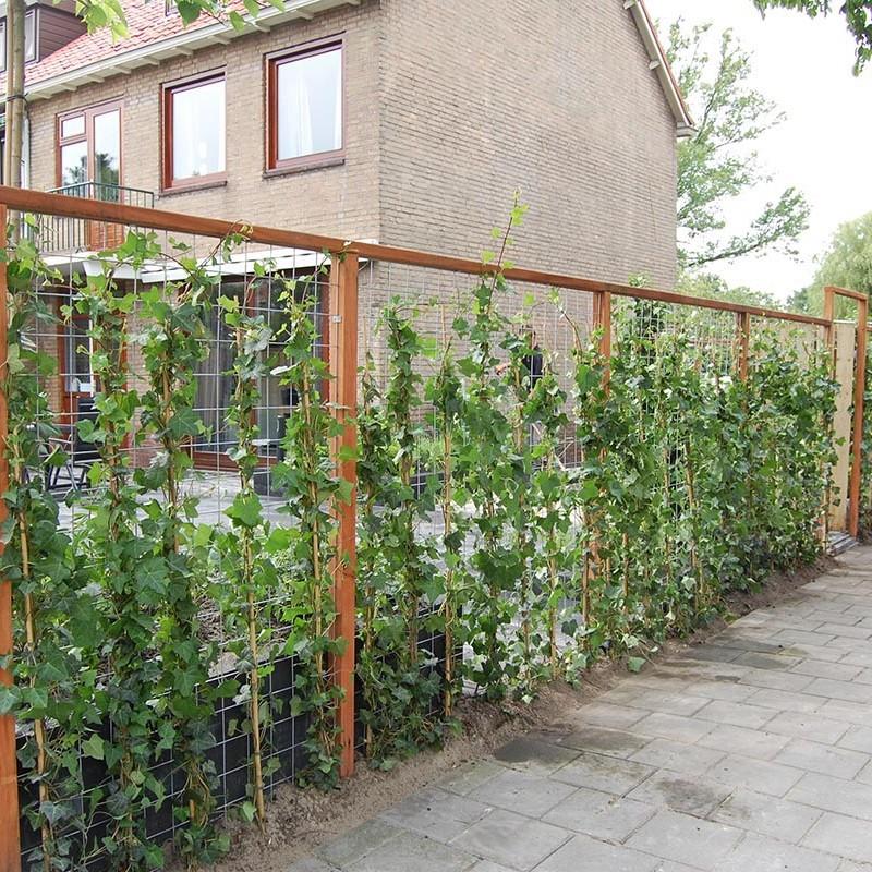 Complete tuin in Santpoort - 27 van 27
