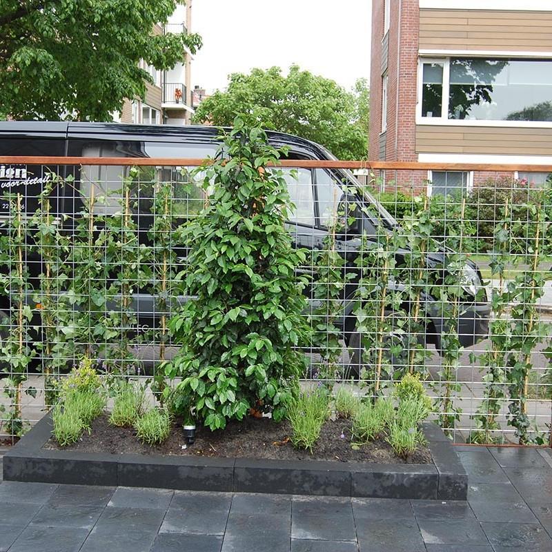 Complete tuin in Santpoort - 9 van 27