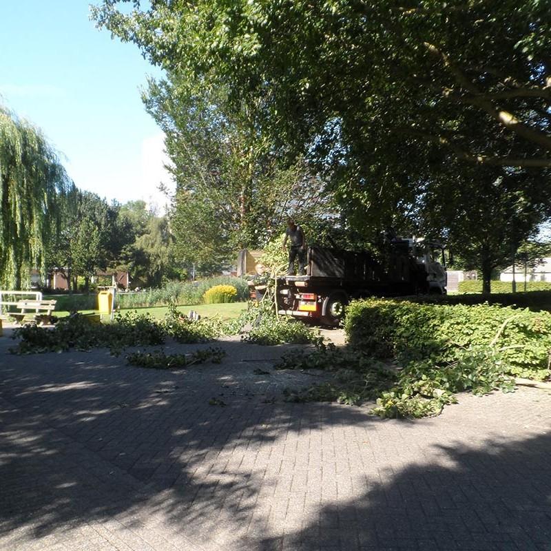 Groot onderhoud bomen Harteheem - 1 van 15