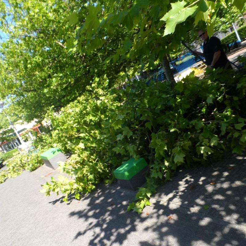 Groot onderhoud bomen Harteheem - 10 van 15