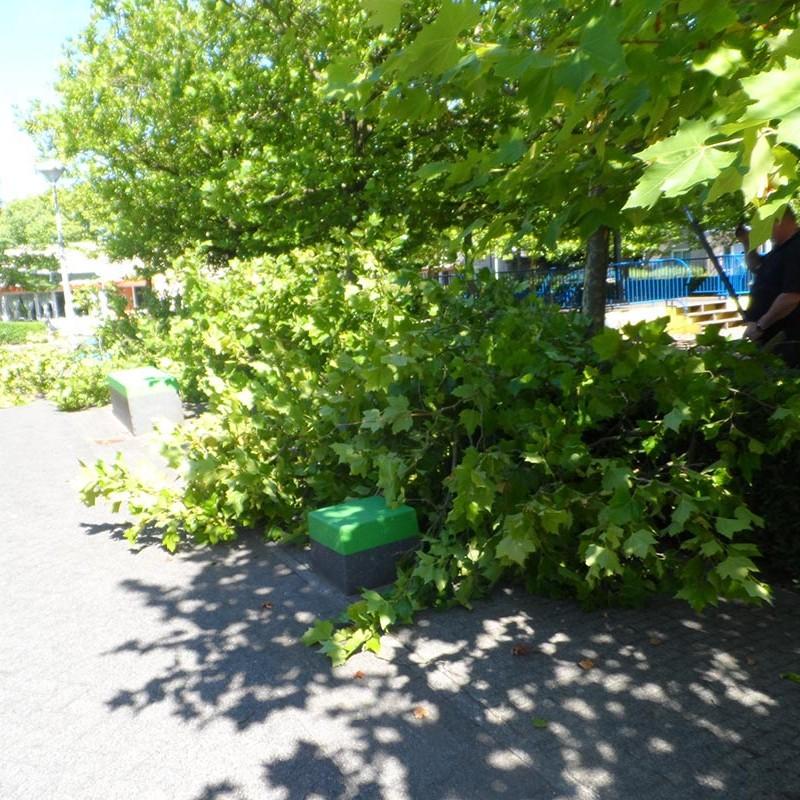 Groot onderhoud bomen Harteheem - 11 van 15