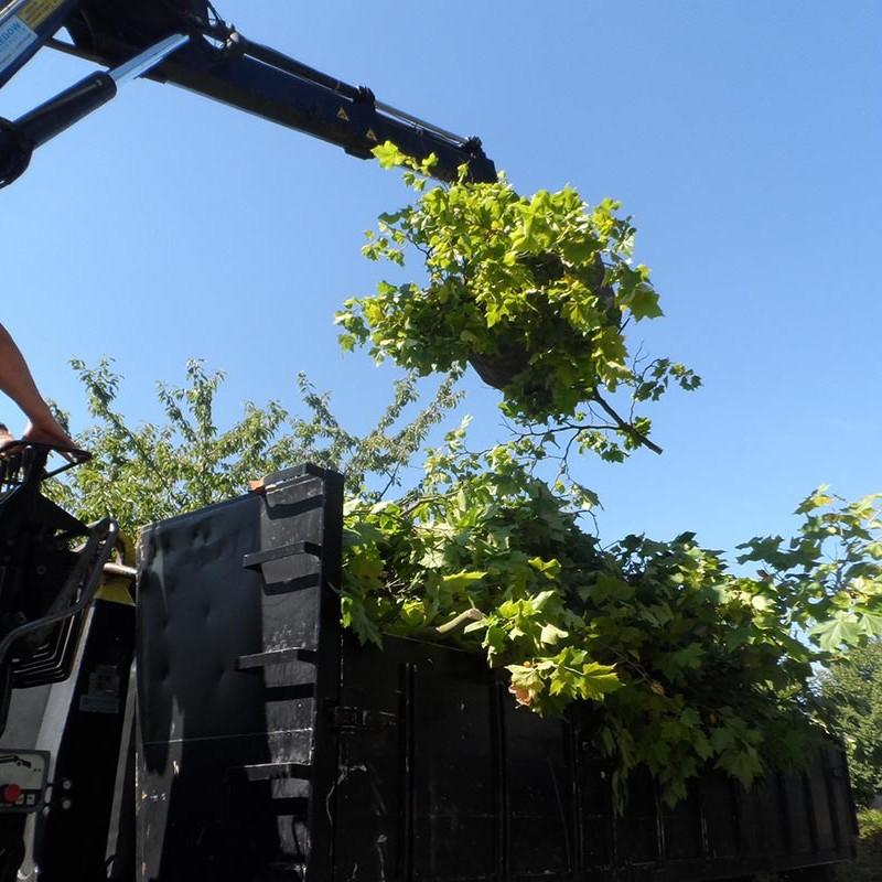 Groot onderhoud bomen Harteheem - 12 van 15