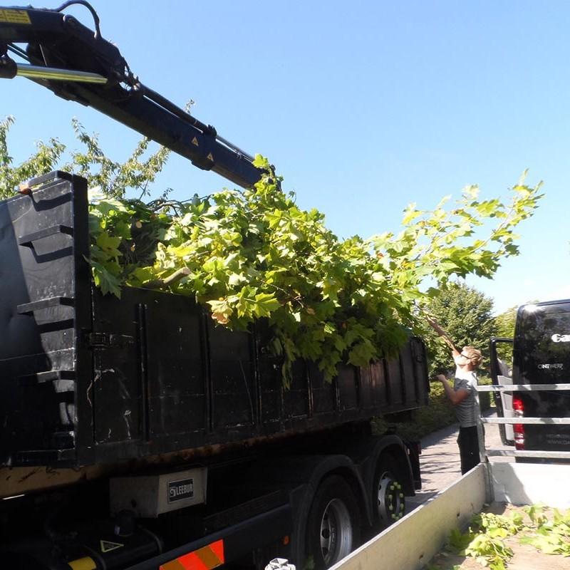 Groot onderhoud bomen Harteheem - 14 van 15