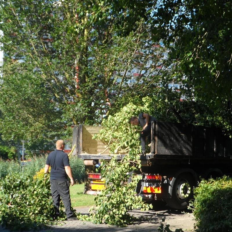 Groot onderhoud bomen Harteheem - 2 van 15