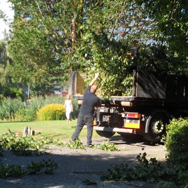 Groot onderhoud bomen Harteheem - 3 van 15