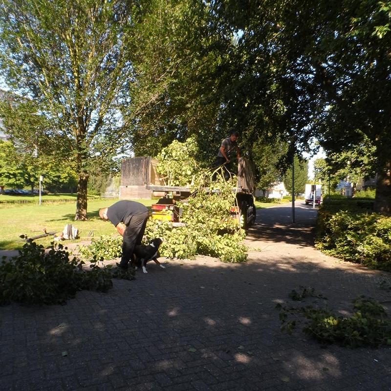 Groot onderhoud bomen Harteheem - 4 van 15