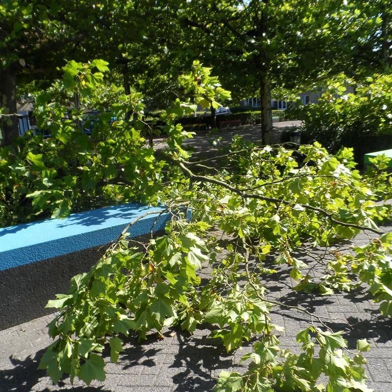 Groot onderhoud bomen Harteheem - 8 van 15