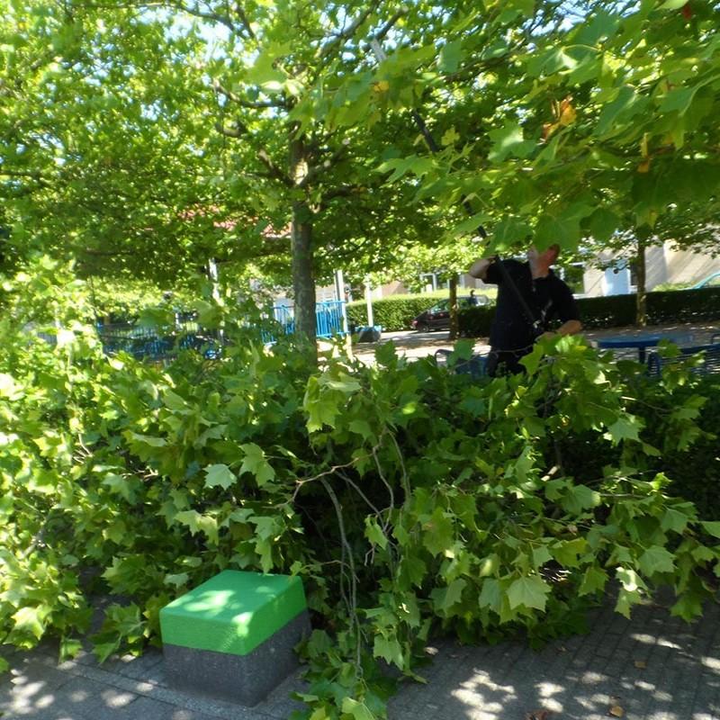 Groot onderhoud bomen Harteheem - 9 van 15