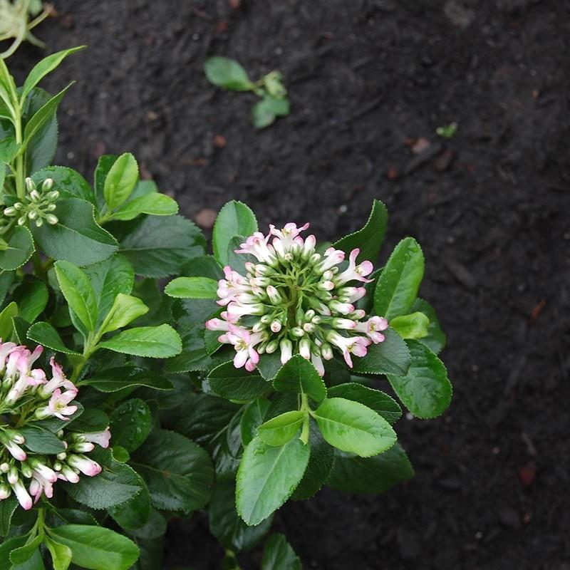 Stakke tuin Castricum - 18 van 22