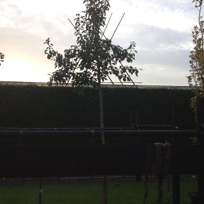 Verhuizen van beplanting naar Nijmegen - 1 van 16