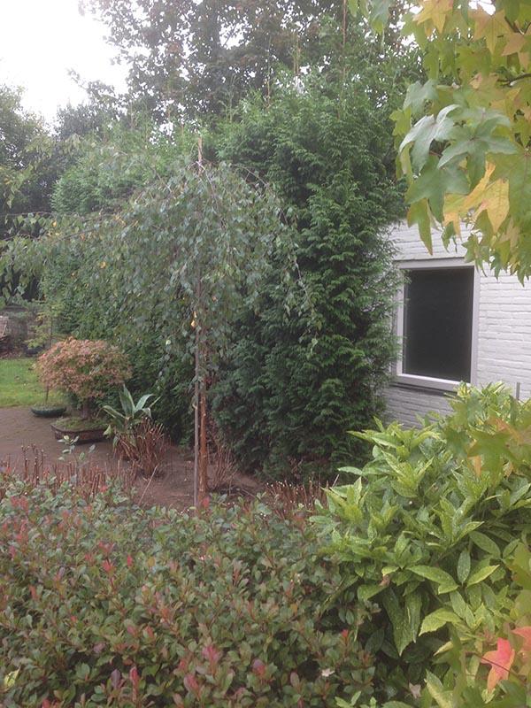 Verhuizen van beplanting naar Nijmegen - 10 van 16