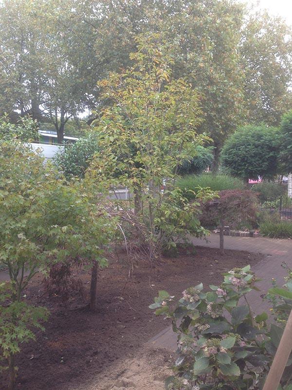 Verhuizen van beplanting naar Nijmegen - 14 van 16